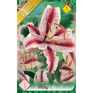 Lilium 'Dizzy' - Orientál liliom (fehér, rózsaszín pettyekkel)