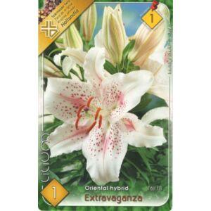 Lilium 'Extravaganza' - Orientál liliom (fehér, rózsaszín pettyekkel)