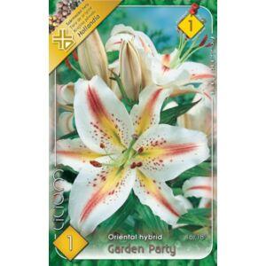 Lilium 'Garden Party' - Orientál liliom (fehér/sárga, rózsaszín pettyekkel)