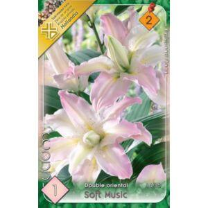 Lilium 'Soft Music' - Teltvirágú orientál liliom (halvány rózsaszín)
