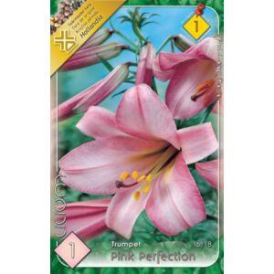 Lilium 'Pink Perfection' - Trombitavirágú liliom (rózsaszín)