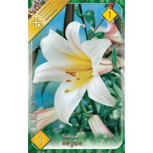 Lilium 'Regale' - Trombitavirágú liliom (fehér, sárga torokkal)