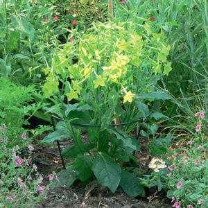 Félkör alakú növénykaró - CHELSEA (zöld)