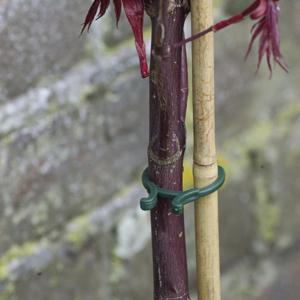 Növénykapocs készlet - VEGRING (zöld)