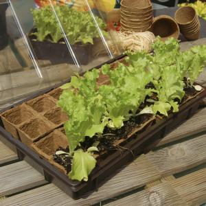 Mini üvegház szett - GROWING KIT
