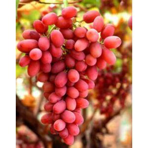 'Crimson' magnélküli csemegeszőlő