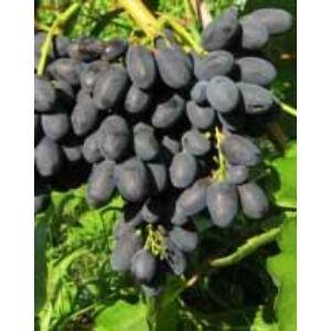 'Melinda' különleges csemegeszőlő