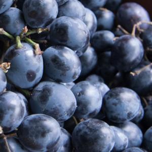 'Moldova R' csemegeszőlő
