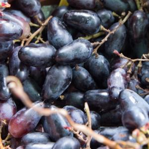 'Suvenír' különleges csemegeszőlő