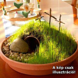 Húsvéti fű (dekorfű) – Vetőmag