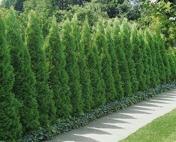 A zöld fal, amely egy Kertbarát álma