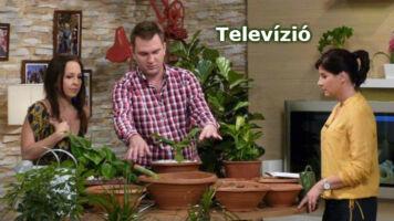 Megyeri Szabolcs a televízió stúdiójában