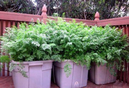 Zöldség palánta rendelhető a Megyeri kertészetből!