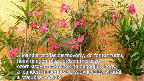 Leander rendelés a Megyeri kertészetből