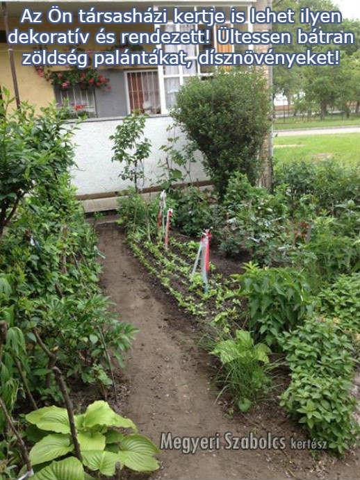 Vásároljon zöldségpalántákat és díszvnövényeket kertészetemben!