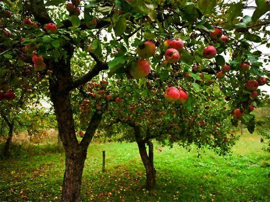Meseszép almafák