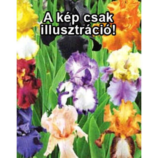 Iris germanica – Színkeverék kerti nőszirom