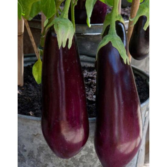 Solanum – Padlizsán