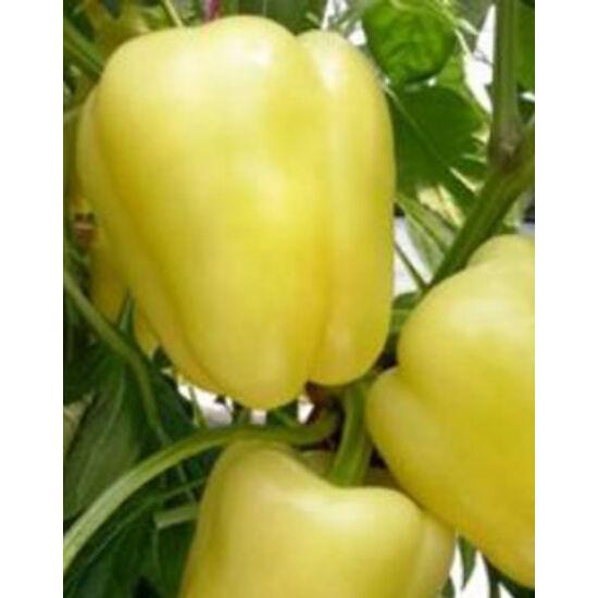 Capsicum 'Bóbita' - Paprika