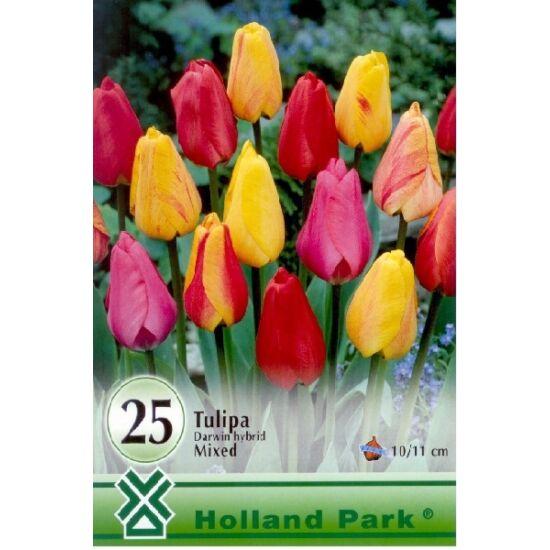 Darwin-hybrid tulipán színkeverék nagy kiszerelés