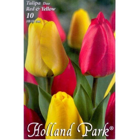 Tulipán Duo- Piros és sárga tulipán