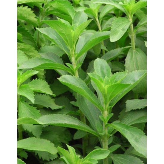 Stevia rebaudiana (Édesfű)