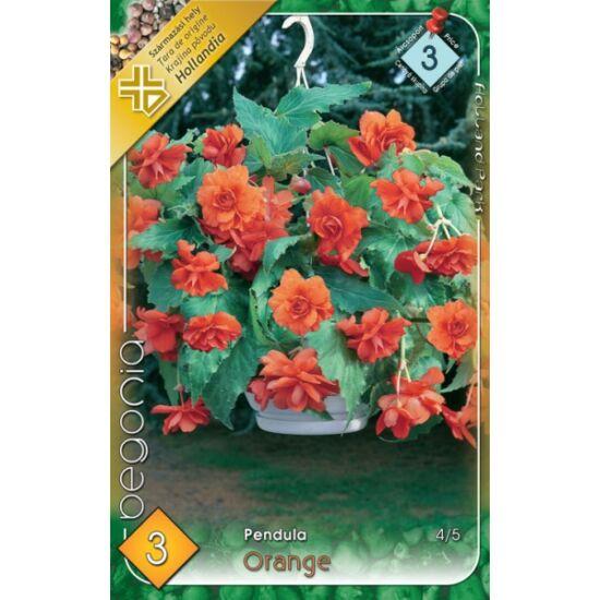 Begonia - Csüngő virágú begónia (narancssárga)