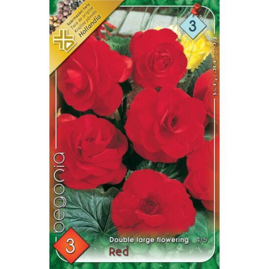 Begonia - Telt, nagyvirágú begónia (piros)