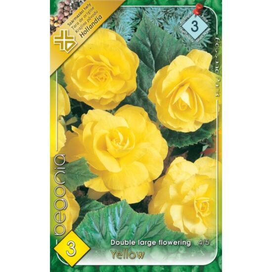Begonia - Telt, nagyvirágú begónia (sárga)