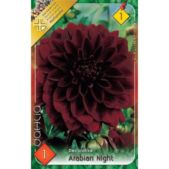 Dekoratív dália 'Arabian Night' (bordó)
