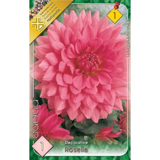 Dekoratív dália 'Rosella' (világos rózsaszín)