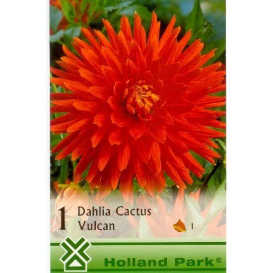 Kaktusz dália 'Vulcan' (pirosas narancssárga)