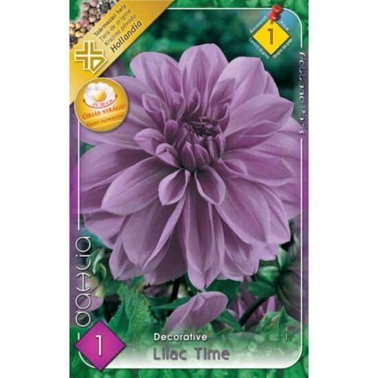 Óriás dekoratív dália 'Lilac Time' (halványlila)