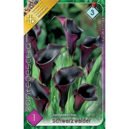 Zantedeschia 'Schwarzwalder' - Kála (fekete)