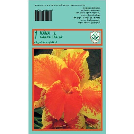 Canna 'Itália' - Kána (sárga, piros ajakkal)