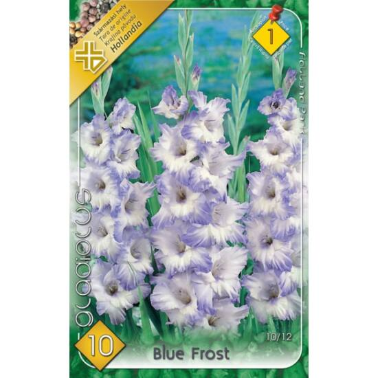 Kardvirág – Gladiolus 'Blue Frost' (világoskék)