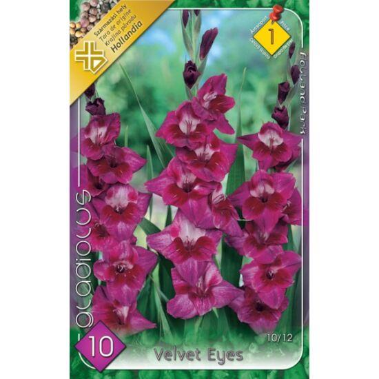 Kardvirág – Gladiolus 'Velvet Eyes' (lilás-rózsaszín)