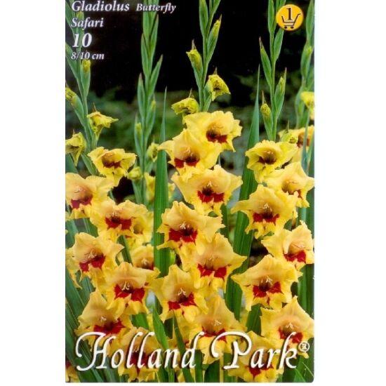 Kardvirág – Gladiolus 'Safari' (sárga, piros torokkal)