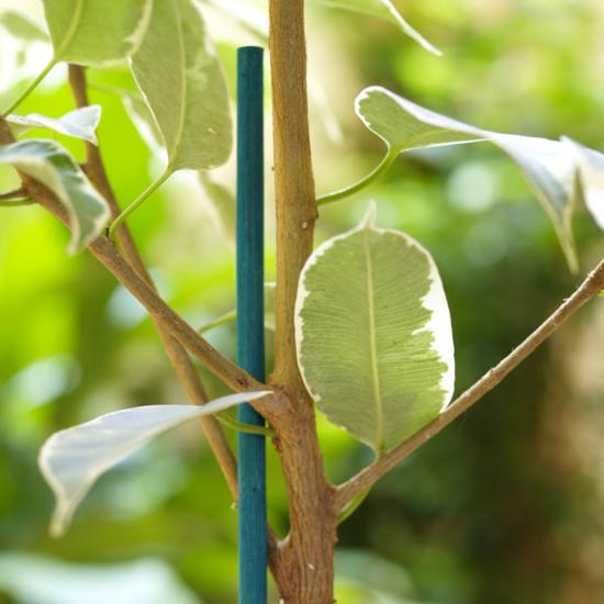 Festett bambusz pálcák - SPLIT BAMBOO (zöld)