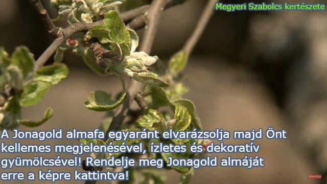 Jonagold almafa csemete rendelése a Megyeri kertészetből