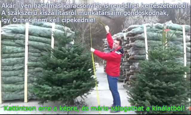 karácsonyfa rendelés Megyeri kertészet