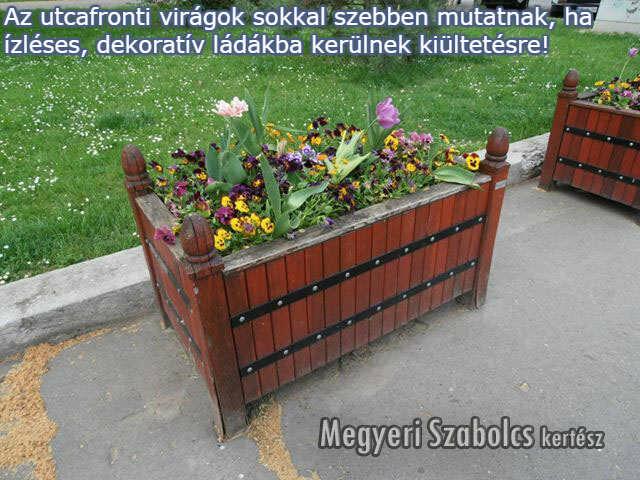 utcafrontra való növények rendelése