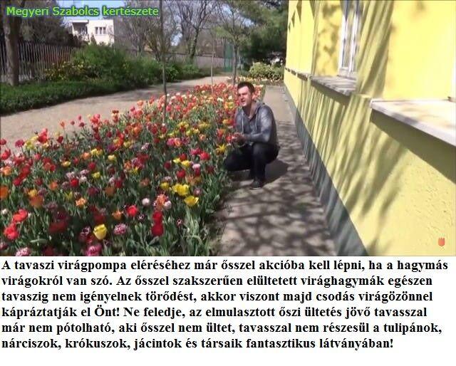 hagymás virágok vásárlás