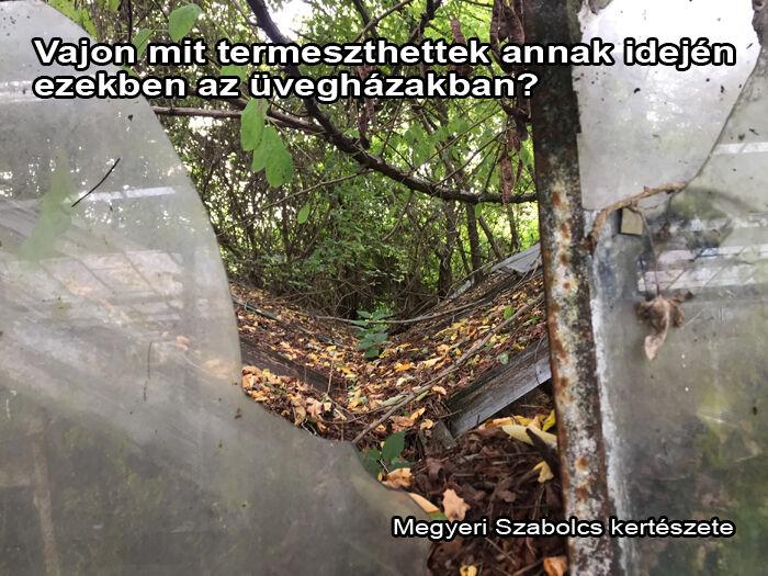 Elhanyagolt üvegház fotója 1